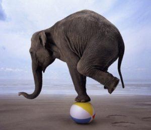 labdán egyensúlyozó elefánt
