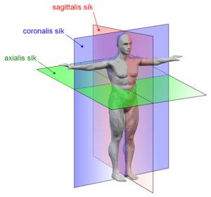 az anatómiában használatos síkok