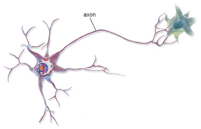 idegsejt sematikus ábrája