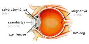 a szem felépítése