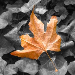 megsárgult őszi falevél