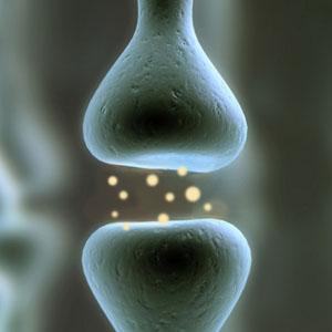 A magas glutamátszinttől progresszívvá válhat az SM