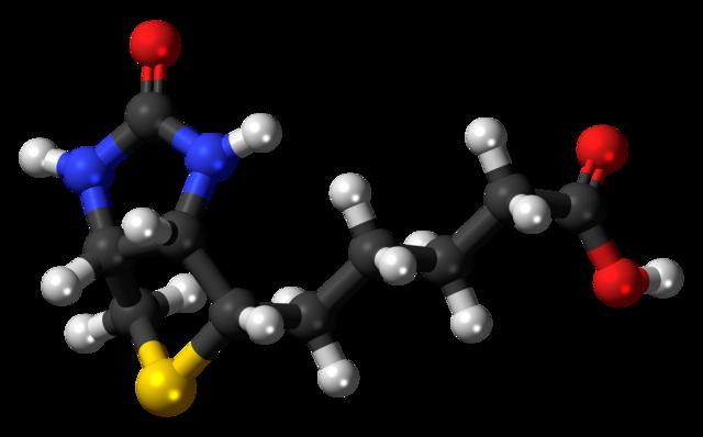 Biotin: új progresszív és RRSM gyógyszer a láthatáron
