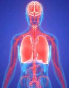 a tüdő és az agy összeköttetése