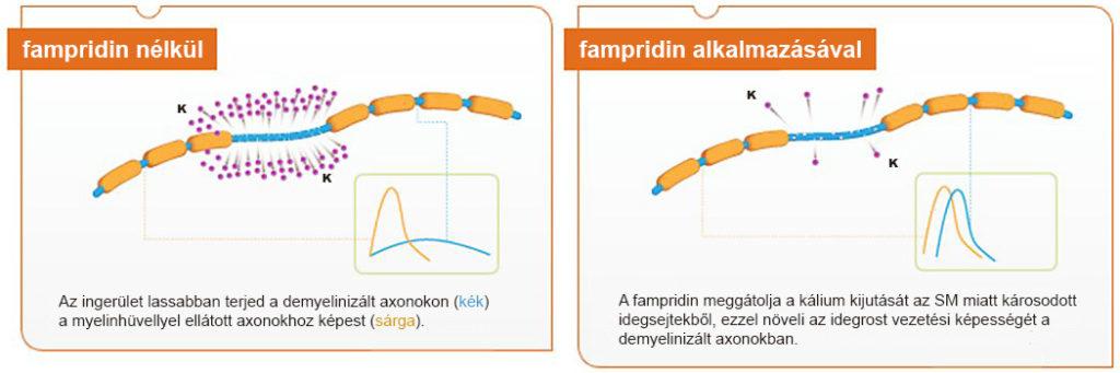 a fampridin hatásmechanizmusa
