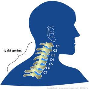 a gerinc nyaki szakasza