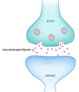 neurotranszmitterek egy szinapszisban